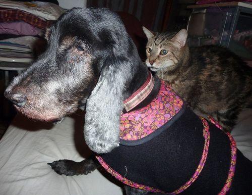 Naomie en manteau liberty et Macho...