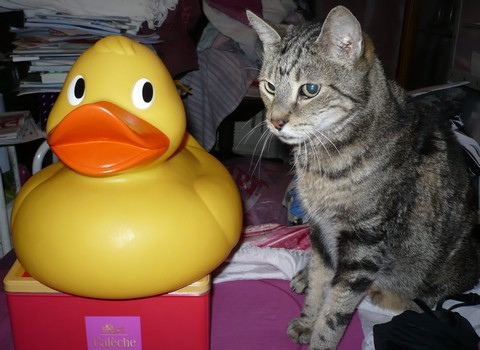 big-duck-and-macho